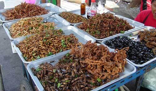 هل تصبح الحشرات غذاء الفقراء خلال الـ 50 عاماً القادمة ؟ 4