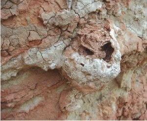هل النمل الابيض أول مزارعي العالم؟