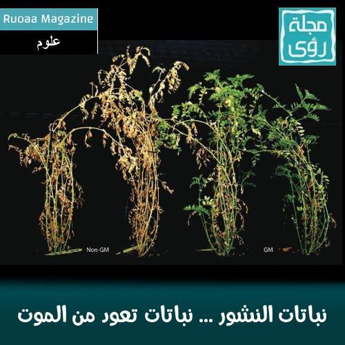 نباتات النشور ... نباتات تعود من الموت 1