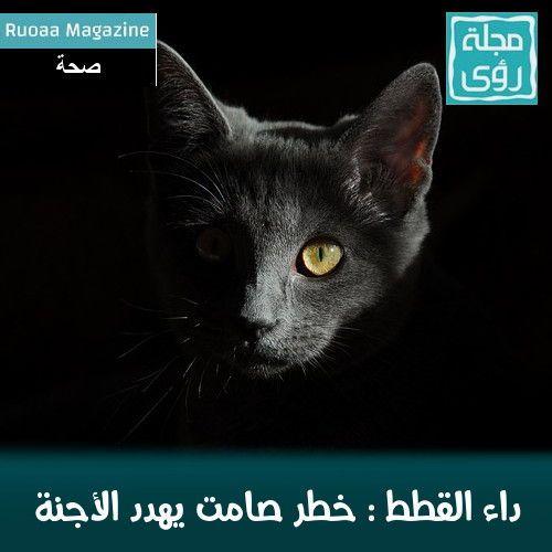 """داء القطط """" داء المقوسات """" : الأسباب - الأعراض - العلاج 1"""