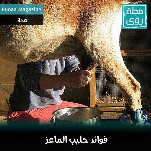 لماذا تفوق فوائد حليب الماعز فوائد حليب الأبقار ؟ 1