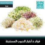فوائد و أضرار الحلبة و طريقة التخلص من رائحتها 3