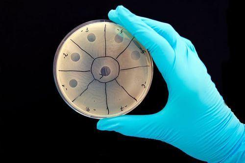 تعرف على الفيروم البشري 4