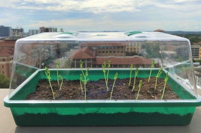 تربة يمكنها سحب الماء من الهواء وتوزيعه على النباتات 1