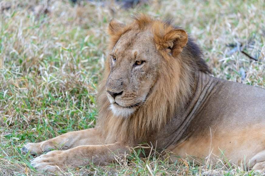 Rupert Gibson Photography - 2018 Tanzania Safari images from the Selous Game Reserve-1