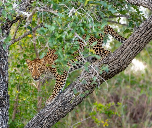 Rupert Gibson Photography - 2018 Tanzania Safari images from the Selous Game Reserve-104