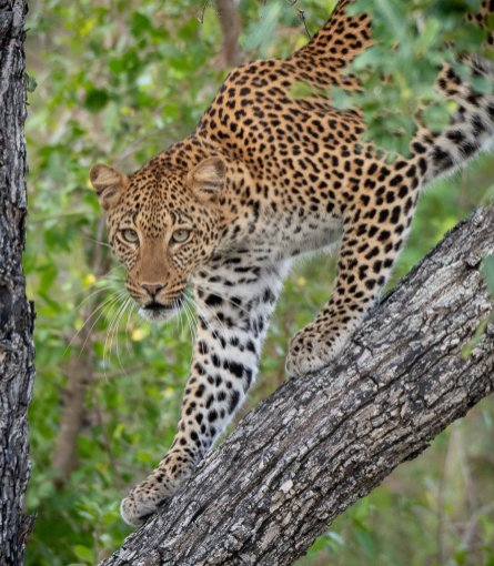 Rupert Gibson Photography - 2018 Tanzania Safari images from the Selous Game Reserve-105