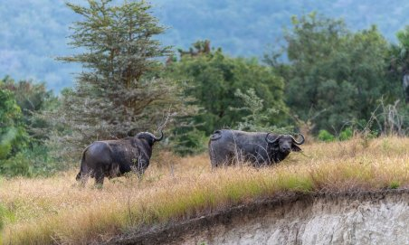 Rupert Gibson Photography - 2018 Tanzania Safari images from the Selous Game Reserve-106