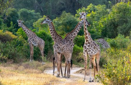 Rupert Gibson Photography - 2018 Tanzania Safari images from the Selous Game Reserve-107