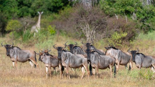 Rupert Gibson Photography - 2018 Tanzania Safari images from the Selous Game Reserve-112