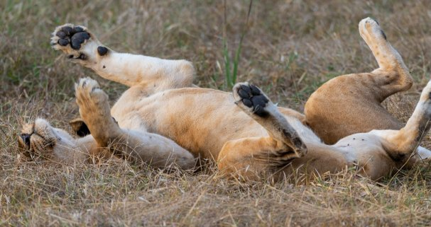 Rupert Gibson Photography - 2018 Tanzania Safari images from the Selous Game Reserve-12