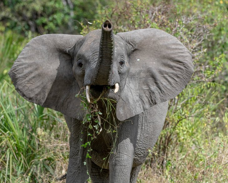 Rupert Gibson Photography - 2018 Tanzania Safari images from the Selous Game Reserve-121