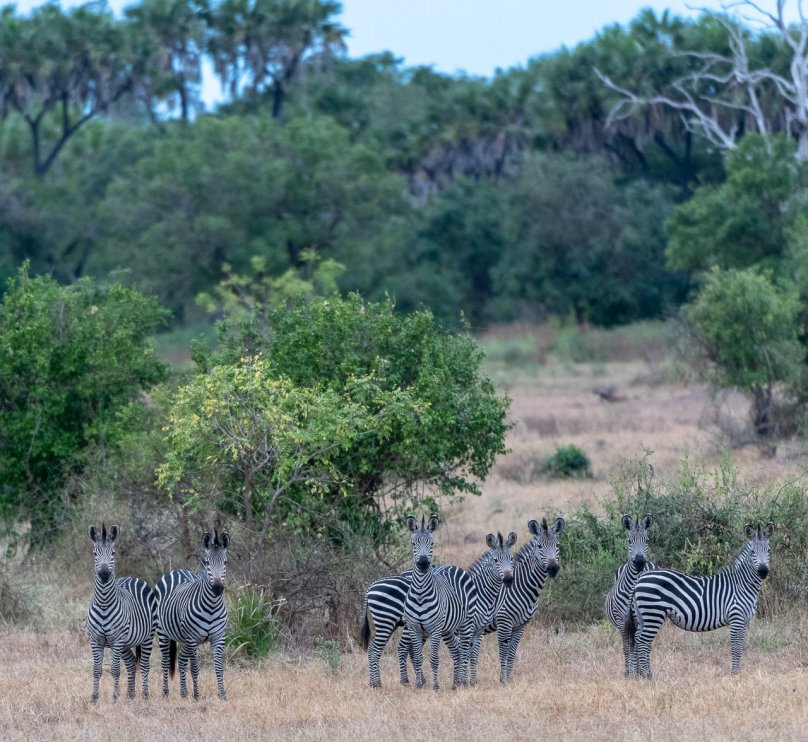 Rupert Gibson Photography - 2018 Tanzania Safari images from the Selous Game Reserve-129