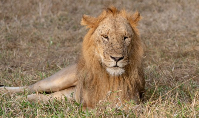 Rupert Gibson Photography - 2018 Tanzania Safari images from the Selous Game Reserve-15