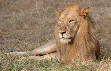 Rupert Gibson Photography - 2018 Tanzania Safari images from the Selous Game Reserve-16