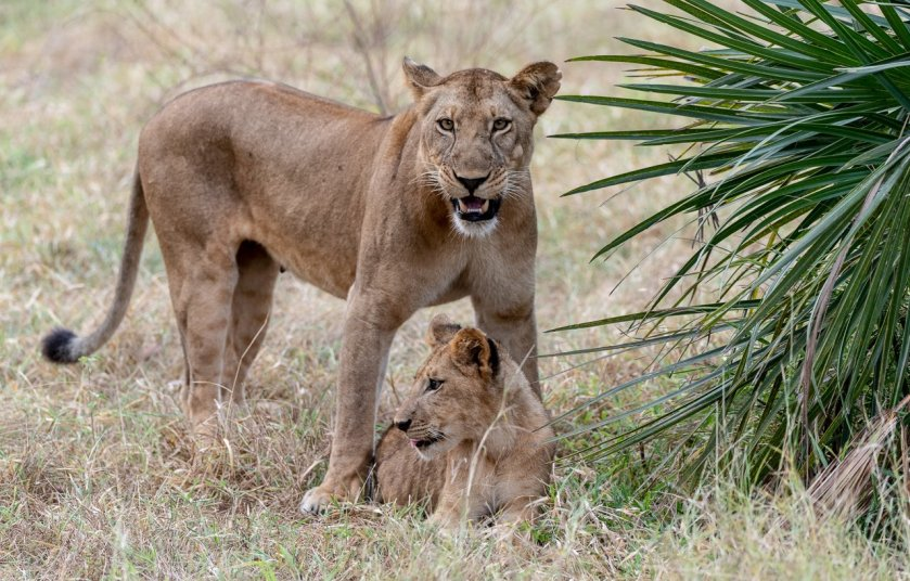 Rupert Gibson Photography - 2018 Tanzania Safari images from the Selous Game Reserve-2