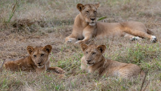 Rupert Gibson Photography - 2018 Tanzania Safari images from the Selous Game Reserve-22