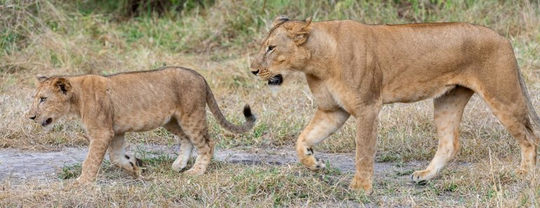 Rupert Gibson Photography - 2018 Tanzania Safari images from the Selous Game Reserve-29