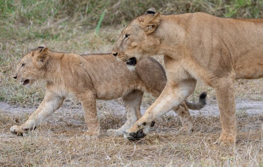Rupert Gibson Photography - 2018 Tanzania Safari images from the Selous Game Reserve-30