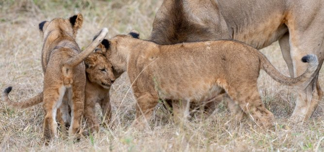 Rupert Gibson Photography - 2018 Tanzania Safari images from the Selous Game Reserve-31