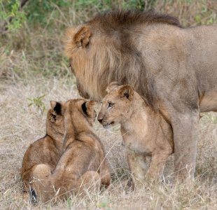 Rupert Gibson Photography - 2018 Tanzania Safari images from the Selous Game Reserve-33