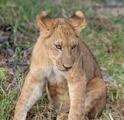 Rupert Gibson Photography - 2018 Tanzania Safari images from the Selous Game Reserve-38