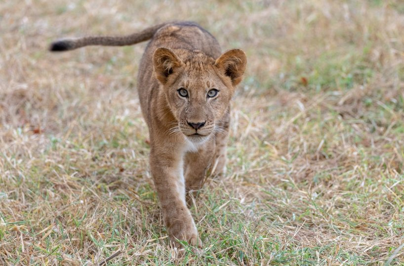 Rupert Gibson Photography - 2018 Tanzania Safari images from the Selous Game Reserve-4