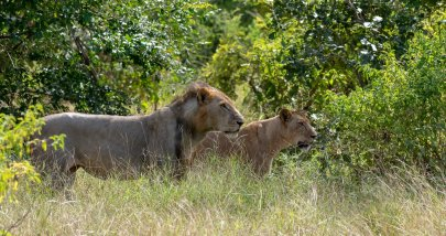 Rupert Gibson Photography - 2018 Tanzania Safari images from the Selous Game Reserve-43