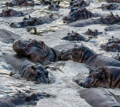 Rupert Gibson Photography - 2018 Tanzania Safari images from the Selous Game Reserve-46