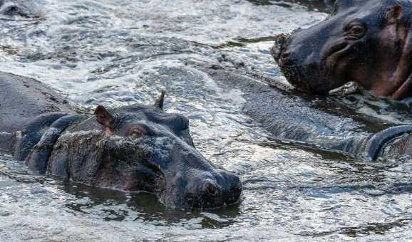 Rupert Gibson Photography - 2018 Tanzania Safari images from the Selous Game Reserve-47