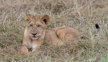 Rupert Gibson Photography - 2018 Tanzania Safari images from the Selous Game Reserve-6