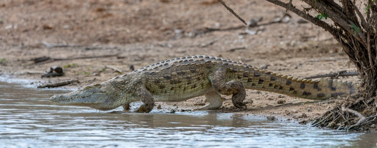 Rupert Gibson Photography - 2018 Tanzania Safari images from the Selous Game Reserve-80