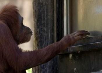 Bild: Zoo Atlanta