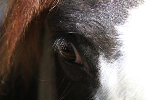 Comanche's eye, photo prompt for 100-word flash.