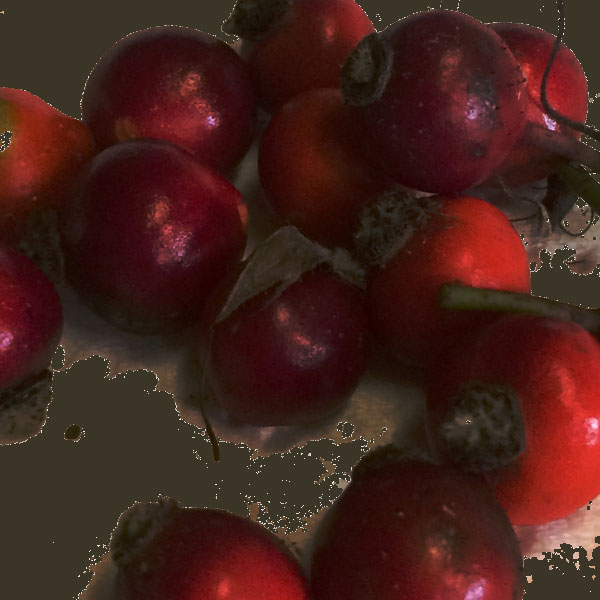 How gathering rose hips led to an idea for a scene of a story.