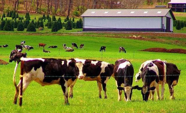 December Milk Production Report