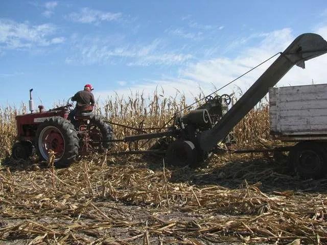 Annual Corn Picking Event