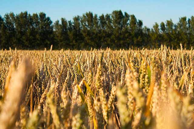 Newton:  Shoup and De Wolf to speak at Wheat Plot Tour