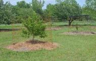 Fertilizing the Home Orchard