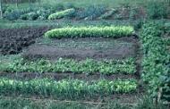 Help for New Vegetable Gardeners