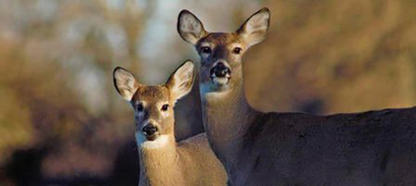 Point of no return? Kansas seeing CWD surge in western part of state