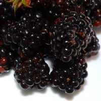 Wild Blackberry Bourbon Jam with FreshTECH Automatic Jam & Jelly Maker Tutorial