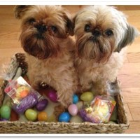 How To Build the Best Easter Basket for your Dog!
