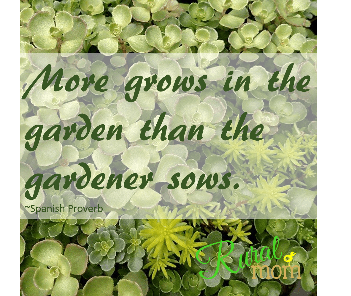 7 Gardening Quotes And Gorgeous Blooms To Inspire Your