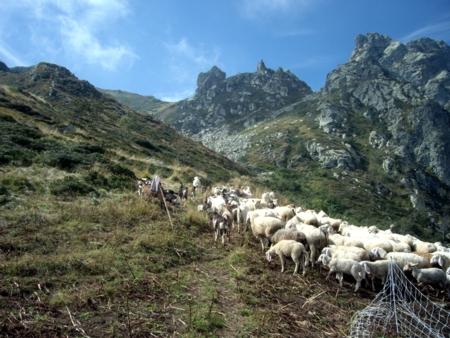 Pastori Capanne Nebbia E Lupi