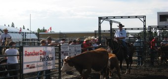 Future Angus and Hereford ranchers gather in two Western Canadian cities