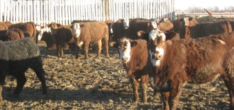 Livestock producers urged to have more conversations about animal care
