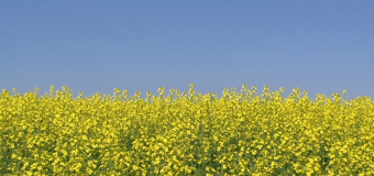 Canola exports to South Korea expected to double