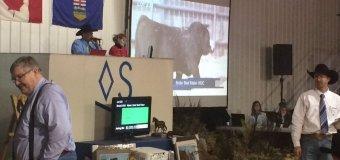 Soderglen ecstatic with 2017 Bull sale results