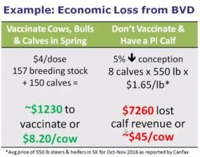 economic loss from BVD example